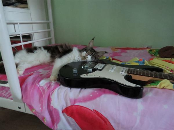Хагрид любит музыку