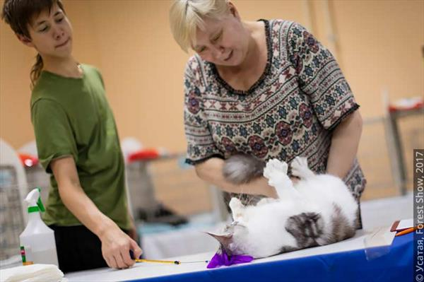 FOREST CAT SHOW 2017 (ICU)