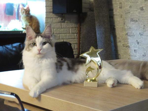 Медея с моим личным трофеем с Crystall Snow Party