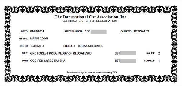 помет зарегистрирован в TICA